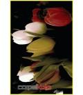 طرح گل رز سفید و قرمز